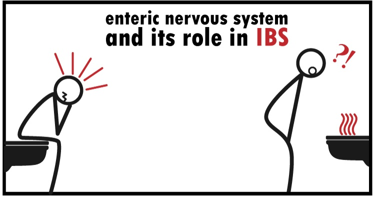Enteric Nervous System (ENS) | Your Second (Irritable) Brain and IBS